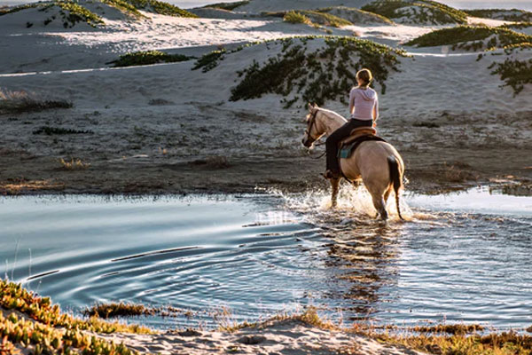 featured image 7 Best Adventurous Activities You Can Do in Spain Horseback riding - 7 Best Adventurous Activities You Can Do in Spain